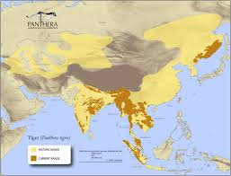 Map Of The World 1 Million Years Ago by Three Thousand Wild Tigers U2013 National Geographic Society Blogs