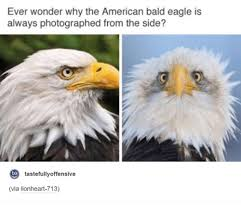 Funniest Memes Ever Tumblr - ever wonder why the american bald eagle is always photographed