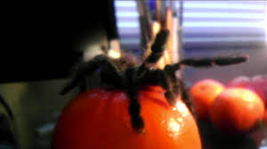 big hairy spider stands on top of orange youtube