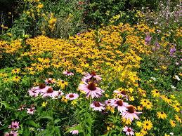 delightful growing wildflowers in backyard part 8 wildflower