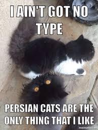 Lawyer Cat Meme - lovely persian cat meme funny iaintgotnotype meme cats catmeme