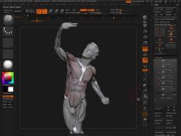 Female Anatomy Figure Human Anatomy Figure In Zbrush Female Anatomy Figure