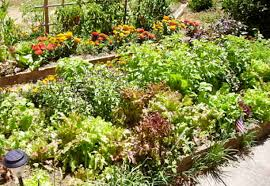 vegetable garden design how to layout a fall garden