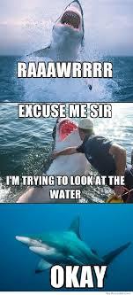 Funny Shark Meme - excuse me shark funny stuff pinterest shark shark week