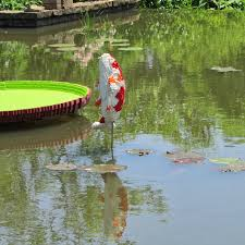 native pond plants the ultimate life list january 2014