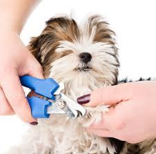 how do i cut my dog u0027s nails without hurting him washingtonian