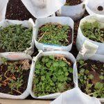 Winter Gardening Ideas Winter Garden Tips Fresh Winter Gardening Ideas Landscaping And