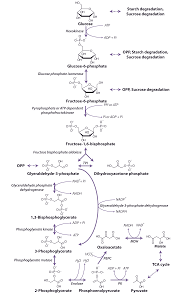 chapter 2 carbon dioxide assimilation and respiration