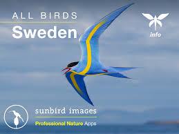all birds sweden a field guide android apps on google play