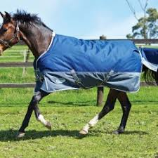 Outdoor Rugs For Horses Cheap Rugs Inc Turnout Stable Cooler Fleece And Exercise
