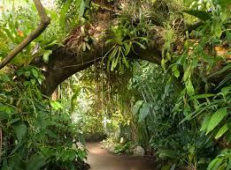Dominant Plants Of The Tropical Rainforest - rainforest archives plant talk