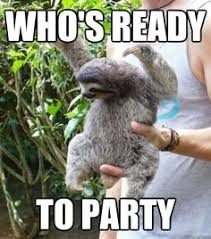 Funny Sloth Pictures Meme - andrew siegal andysiegal1 on pinterest