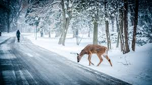 photos of snow free images tree snow road street frost animal deer weather