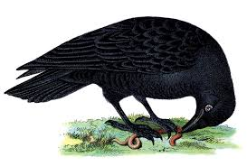 raven image free clip art library
