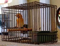 uccelli in gabbia anche un tordo ha un anima zoe la gatta