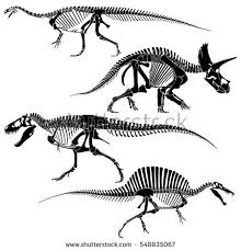 set silhouettes skeletons dinosaurs fossils hand stock vector