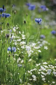 2332 best meadows u0026wildflowers images on pinterest nature