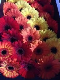 wholesale fresh flowers 65 best diy orange flowers wedding flowers images on