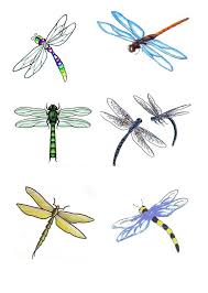 dragonfly tattoo designs real photo pictures images and