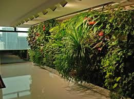 plant vertical garden or how to make a real garden in the office