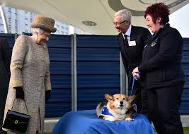 Queen Elizabeth Ii Corgis by Queen Elizabeth Adopts A New Corgi Whisper
