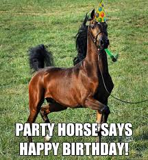 Horse Birthday Meme - party horse says happy birthday party horse quickmeme