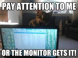 Pay Attention To Me Meme - pay attention to me or the monitor gets it angry kitty quickmeme