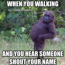 Funny Gorilla Meme - gorilla images on favim com page 2