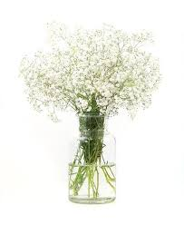 baby breath flowers baby s breath brisbane market flowers same day delivery