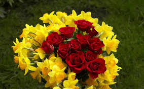red narcissus flower red roses and narcissus 142410 wallpapers13 com