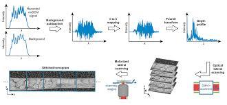 label free three dimensional imaging of caenorhabditis elegans