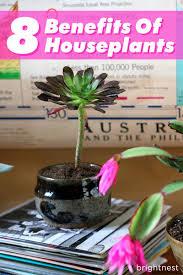 benefits of houseplants brightnest eight health benefits of houseplants