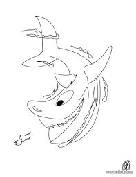imagenes animales acuaticos para colorear dibujos animales marinos para colorear 59 dibujos de animales para