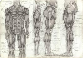human anatomy sketch www uocodac com