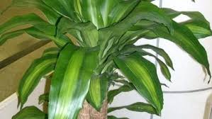household plants houseplants safe for cats to eat u2013 goodonline club