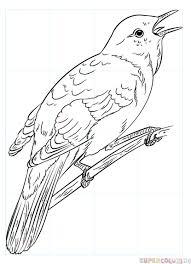 draw nightingale step step drawing tutorials