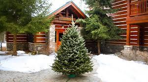 five star christmas tree co in national gilt com