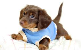 cute puppies 2 wallpapers wallpapers of puppies 85