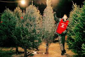 batavia boy scout fundraisers brighten seasons with christmas