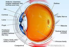 The Anatomy And Physiology Of The Eye Eye Anatomy Detail Picture Image On Medicinenet Com