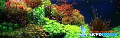 jual aquascape murah di tangerang murah tapi berkualitas hmm