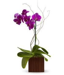orchid flowers philadelphia florists flowers in philadelphia pa orchid flower