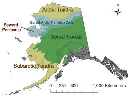 boreal arctic transition zone usgs changing arctic ecosystem