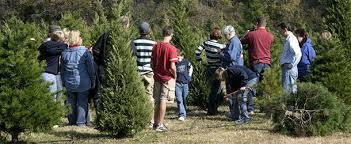 dfwchild christmas tree farms in dallas fort worth