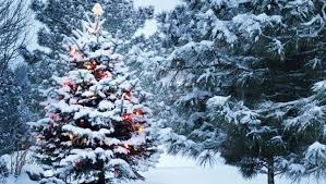 christmas tree with snow what s the environmentally preferable choice a real christmas