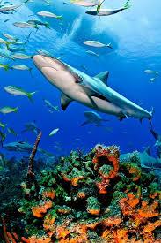 3698 sea images ocean animals