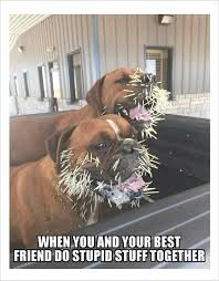 Silly Dog Meme - 10 dog memes 3 a dog who took a chance from a veterinarian