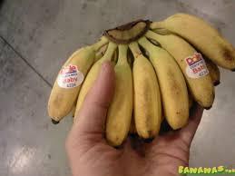 tiny banana super small bananas bananas org