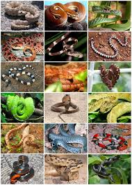 snake wikipedia