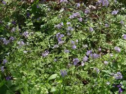 Asheville Nc Botanical Garden by Asheville Nc U2013 Asheville Botanical Gardens Ranger Annette